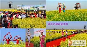 【武功头条】中国・武功古城第四届油菜花节4月3日即将盛大开幕!