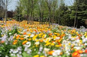 清明问花绿博园,不负人间四月天