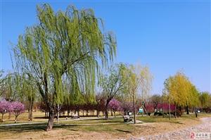 博城人民公园的春天――蓝天、白云、花花绿绿
