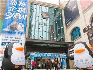 方圆荟企鹅秀,海狮表演。