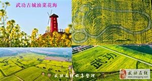 【头条】明成:清明节我要去武功古城看油菜花,听说4月3日就开幕啦!