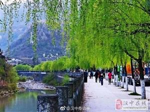 镇巴县城的春天,好美