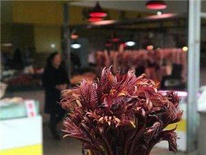 来自大自然的馈赠 陕南本地野生椿芽上市
