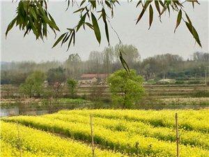 漫游春天――滁州花山自驾游