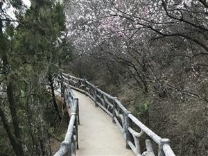 春暖花开,去大美清水寻花问柳