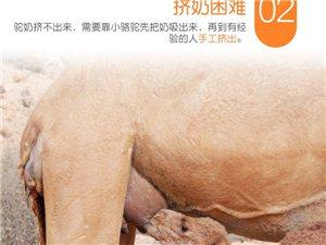 骆驼奶,因为珍稀,所以珍贵