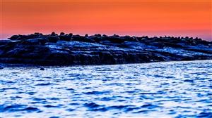 自然之美――�|河口的斑海豹