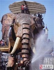 巨象空降寻乌丨大象免费骑,限量领票中!