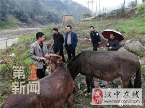 威尼斯人网上娱乐平台南郑:好心村民捡到四匹骡子 照料喂养报警寻失主