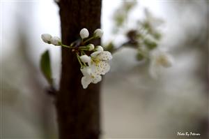 这是啥名字的 花 、、、