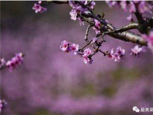 """望埠桃花源人间四月天――""""寻梦桃花源""""首届望埠桃花节4月13日开幕!"""