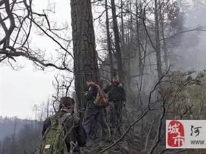 四川凉山木里森林火灾起火原因确认!