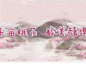 莱阳市首届赭埠桃花文化艺术节即将开幕啦!