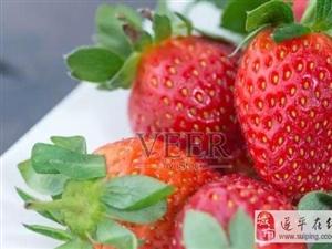 这个季节,街边到处都是卖草莓的,哪些草莓不能买?