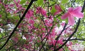 鲁山杜鹃岭十连瀑环线徒步(4月13日)