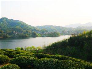 青山绿水溢茶香――2019春茶季之西茶谷
