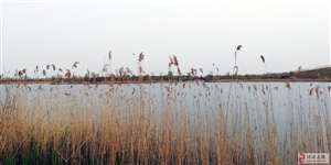 """博兴县麻大湖国家湿地公园――""""踏春"""""""