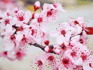 定了,定了!莱阳城厢西林格庄第二届桃花节即将开幕!