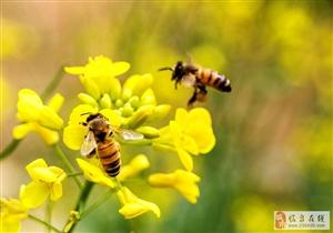 两只小蜜蜂,飞到花丛中……