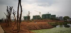 信丰【中央生态公园】已开始大面积种植香樟树,你离公园生活还有多远?