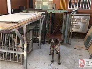 东营2人因违法饲养禁养犬分别被罚!