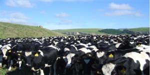 为什么新西兰奶粉这么受宝妈欢迎?究竟有何内幕