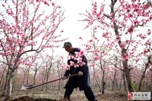 田园百姓们劳作的样子很美 ,常有花香陪伴身旁。