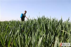 农忙四月天,一个个忙碌的身影!