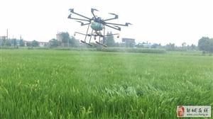 现代农业:无人机喷洒农药!