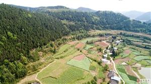 盐亭两河汤家坝700亩牡丹花开正美,惊艳了整个山乡!