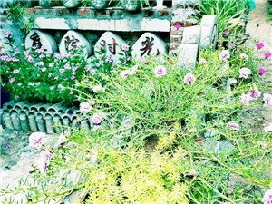 博鳌北山孔孟岭农家小庭院