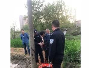桐城一老人陷入泥塘,竟是因为芹菜导致的?
