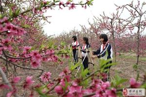 """田园间,有一群学生在用画笔""""留住""""春天!"""