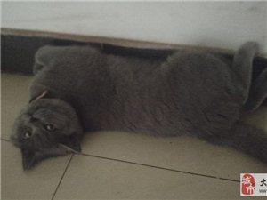 求助!大足人帮忙留意下,我家猫猫跑丢了