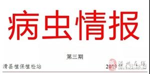 滑县农民朋友注意,小麦赤霉病高发期,请做好防护!