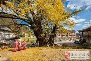 """遵义洪关第二届""""映山红节"""",4.27―5.12在播州区洪关盛大举行"""