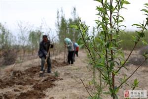 谷雨时节,田地里有一群正在劳作的人,正可谓农忙啊……