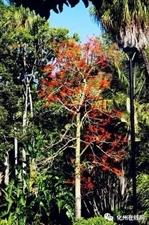 化州一中校友捐款10万多元 为母校种植百棵火焰树