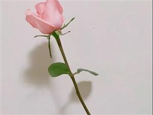幸福婚姻,要双方努力【新闻婚介刘大姐/图文】