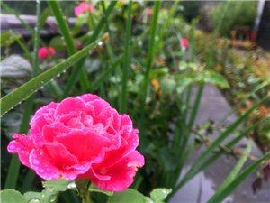春雨落花悄无声 山中古观听风鸣 ――在雨后的长春观洗涤心灵