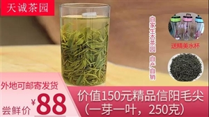 300亩优质茶园,每日制茶21小时,潢川南城这家茶业店实在是...