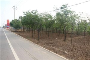 合阳黑池镇以春季绿化为突破  建设生态宜居美丽家园