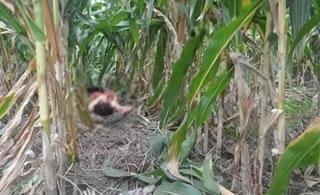 多年前博兴一女士在玉米地被杀,还有3人被打!幸亏有他……