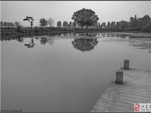 汤逊湖1号湿地