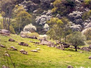 云凤山的春天