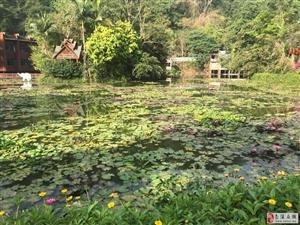 西双版纳游第3天,南溪在线带你游览:普洱野象谷、傣族园、总佛寺