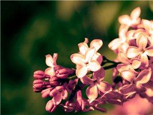 花     ��