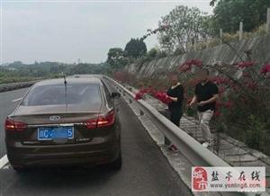 悲催 男子高速上停车携妻采花,当场被查遭重罚