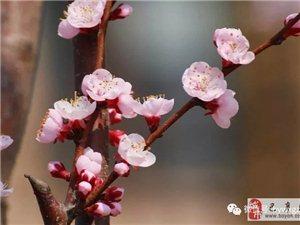 苏城巴彦摄影之园春色关不住
