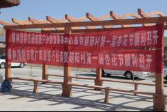 最是花开好时节――哈毕日嘎镇朝阳村举办首届杏花节